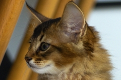 Amber-Fox-4